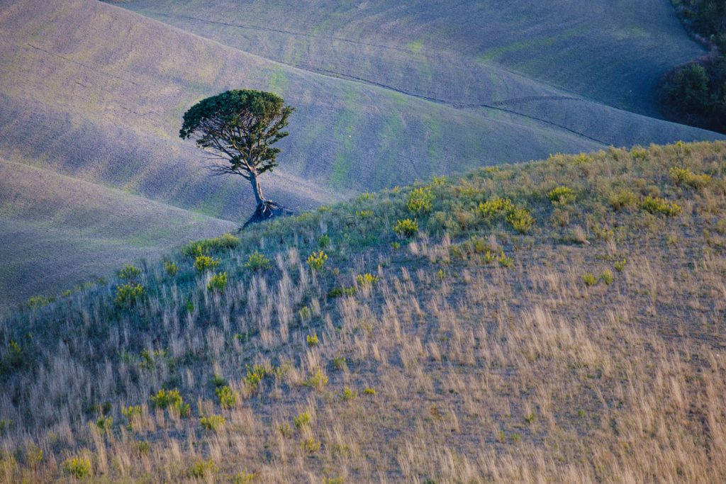 Téléobjectif arbre seul