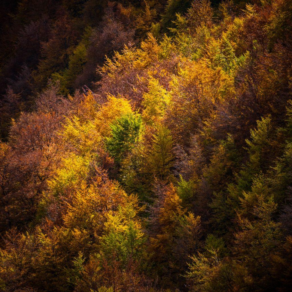 Composition minimaliste au téléobjectif (forêt)